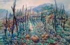 Luce-nella-natura olio 80 x 60 2015
